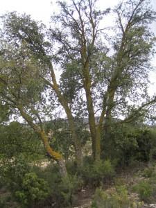 tree1sm