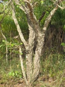 tree2sm