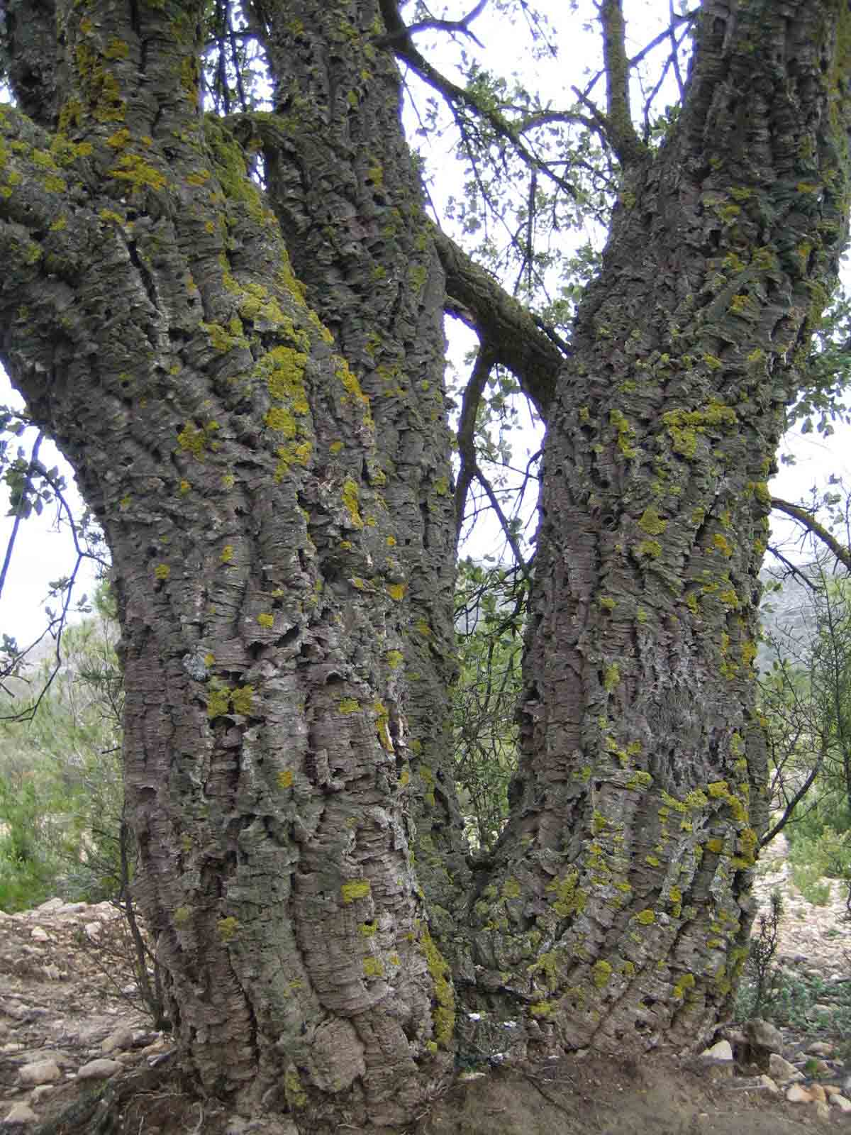 treebark1sm
