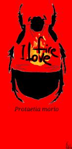 Protaetia morio by Josep Serra
